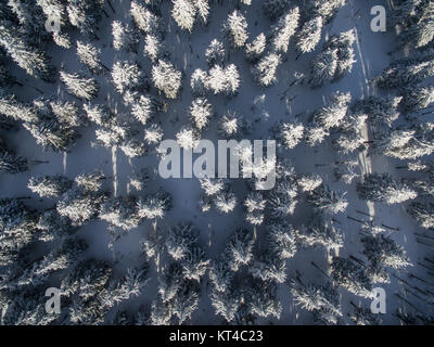 Aerial view of winter forest - trees covered with snow - Stock Photo
