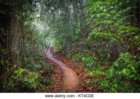 Path in the jungle. Sinharaja rainforest in Sri Lanka. - Stock Photo