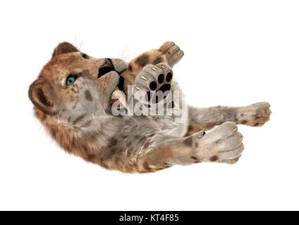 3D Rendering Sabertooth Tuger on White - Stock Photo