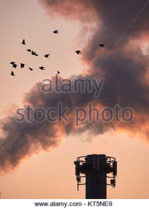 birds before a powerplant - Stock Photo