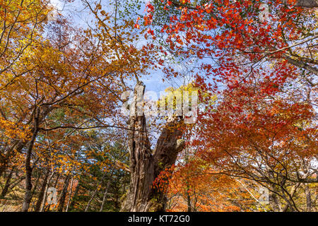 Colourful Forest in Autumn - Stock Photo