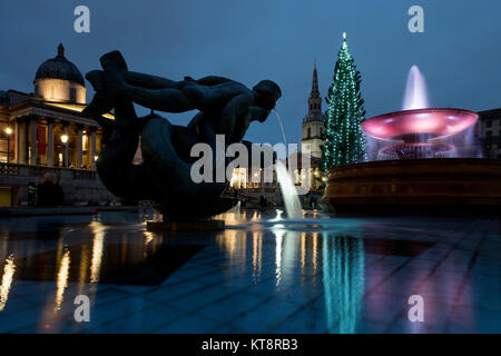 London, UK. 21st December, 2017. The Trafalgar Square Christmas tree is a Christmas tree donated to the people of - Stock Photo