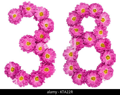 Arabic numeral 38, thirty eight, from flowers of chrysanthemum, isolated on white background - Stock Photo