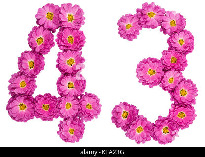 Arabic numeral 43, forty three, from flowers of chrysanthemum, isolated on white background - Stock Photo