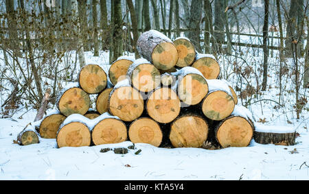 Winter Camping And A Pile Of Logs - Stock Photo