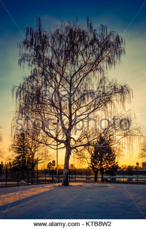 Sunset Behind a Tree - Stock Photo