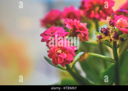 Potted flowers on a window sill. - Stock Photo