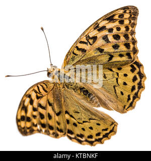 Butterfly Silver-Washed fritillary, lat. Argynnis paphia,  isolated on white background - Stock Photo
