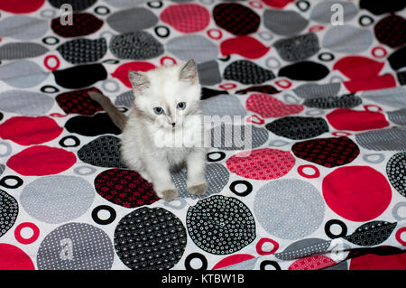 sad kitten with blue eyes on a bed - Stock Photo
