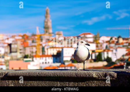 Seagull and Torre dos Clerigos in Lisbon, Portugal - Stock Photo
