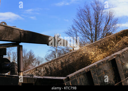 Landscapers using chipper machine to remove and haul chainsaw tree branches Machine for cutting trees - Stock Photo