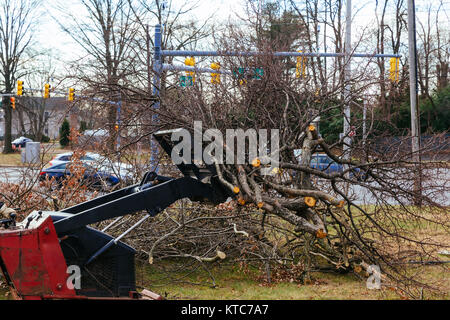 Cuts tree with chainsaw, concept of deforestation. Selective focus - Stock Photo