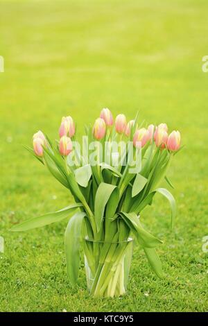 Tulips in the glass vase - Stock Photo