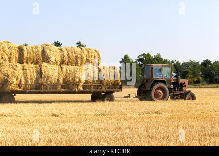 Tractor carrying hay bale rolls - stacking them on pile. Agricultural machine collecting bales of hay on a field - Stock Photo