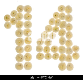 Arabic numeral 14, fourteen, from cream flowers of chrysanthemum, isolated on white background - Stock Photo