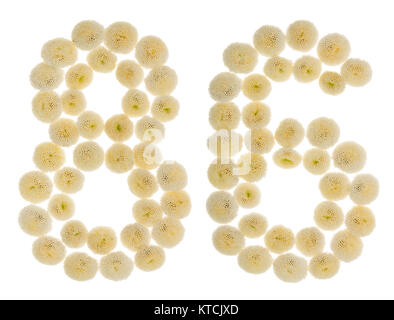 Arabic numeral 86, eighty six, from cream flowers of chrysanthemum, isolated on white background - Stock Photo