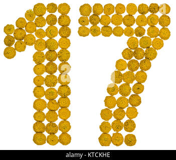 Arabic numeral 17, seventeen, from yellow flowers of tansy, isolated on white background The tansy - a plant of - Stock Photo