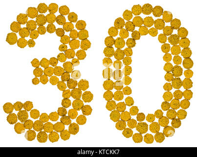 Arabic numeral 30, thirty, from yellow flowers of tansy, isolated on white background The tansy - a plant of the - Stock Photo