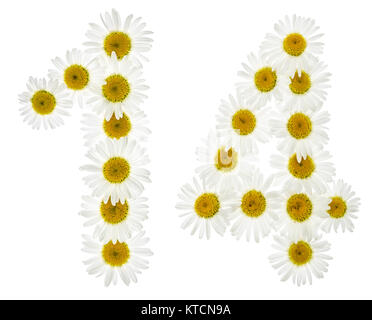 Arabic numeral 14, fourteen, from white flowers of chamomile, isolated on white background - Stock Photo
