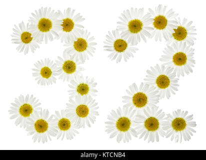 Arabic numeral 32, thirty two, from white flowers of chamomile, isolated on white background - Stock Photo