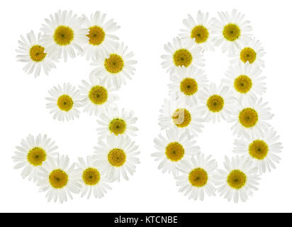 Arabic numeral 38, thirty eight, from white flowers of chamomile, isolated on white background - Stock Photo