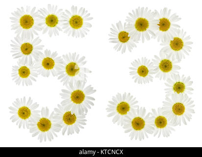 Arabic numeral 53, fifty three, from white flowers of chamomile, isolated on white background - Stock Photo