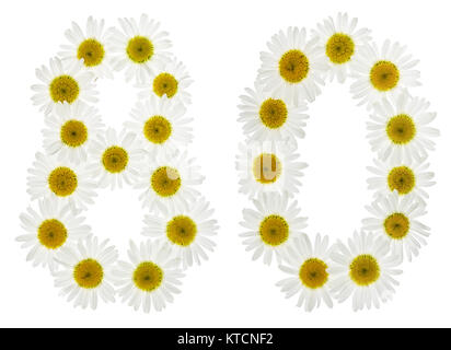 Arabic numeral 80, eighty, from white flowers of chamomile, isolated on white background - Stock Photo