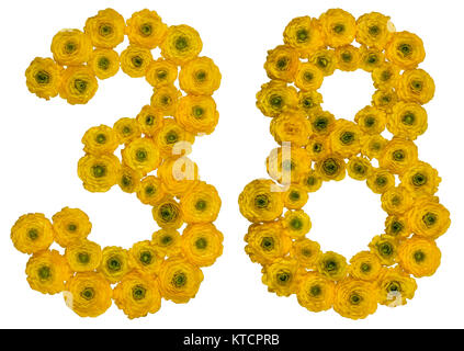 Arabic numeral 38, thirty eight, from yellow flowers of buttercup, isolated on white background - Stock Photo