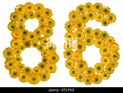 Arabic numeral 86, eighty six, from yellow flowers of buttercup, isolated on white background - Stock Photo