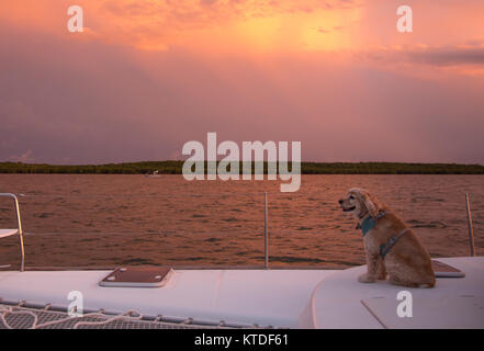 Boat Dog watches sunset from sailboat bow - Stock Photo