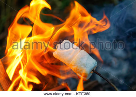 Roasting Marshmallows Over A Summer Campfire