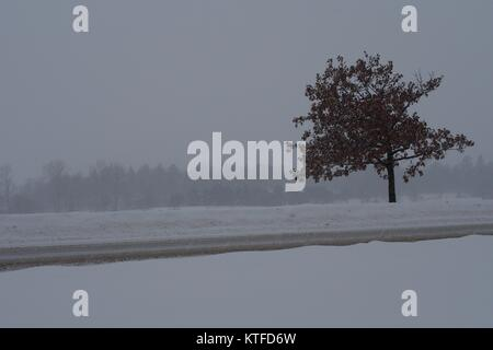 Small lonely maple tree contrasted against a winter snow storm, Dow's Lake, Ottawa, Ontario, Canada. - Stock Photo