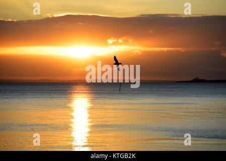 Seagull flying on the foreshore Southend on Sea Essex seafront at sunset. Setting sun reflected in the water of - Stock Photo
