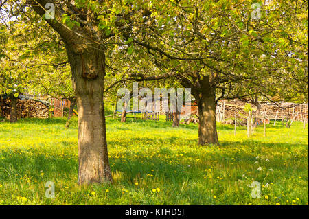 Classic rural cottage garden with fruit trees in the Eifel area, Germany. - Stock Photo