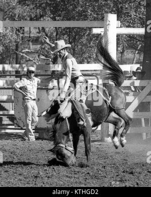 KINGAROY, AUSTRALIA, CIRCA 1980: Unidentified contestant rides a bucking bronco during a small town rodeo, circa - Stock Photo