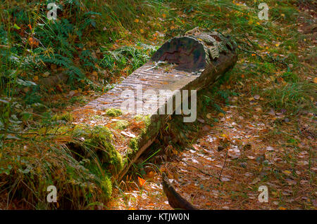 wooden bench in the forest, bench made of logs - Stock Photo