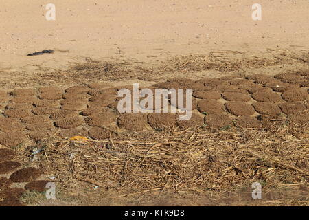 Cow dung cakes getting Sun dried in rural India - Stock Photo