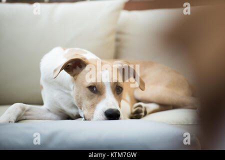 Young Dog Sleeping on Furniture Outside - Stock Photo