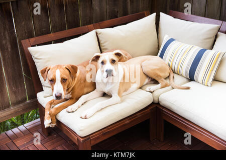Two Young Dogs Relaxing on Outdoor Furniture - Stock Photo - Two Young Dogs Relaxing On Outdoor Furniture Stock Photo: 170090092