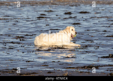 Southport, Merseyside, Sunny in Southport. 28th December 2017. UK Weather.  A warm and sunny day greets dog walkers - Stock Photo