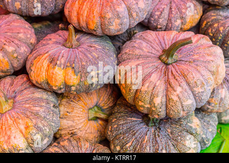 Pumpkin sale in the Market in Asia Thailand - Stock Photo