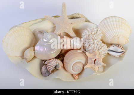 Different sea shells on white background - Stock Photo