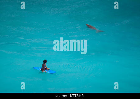 Surfer girl with afro hairstyle sitting on surfboard in crystal clear green water looking at sea cow at Uluwatu - Stock Photo