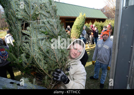 More than a dozen Airmen assigned to the 105th Airlift Wing volunteered their time to help load Christmas trees - Stock Photo