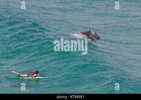 Surfing with dolphins - Stock Photo