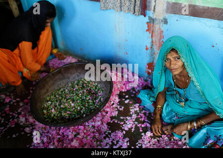 Two young indian women in sari sitting on the floor of a blue room, surrounded with roses and collecting petals,village - Stock Photo