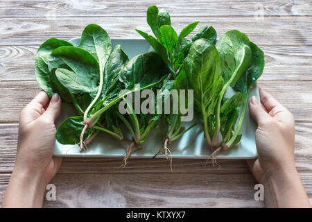 Fresh Baby spinach heart shape leaf on white plate, blue wooden background. Top view with copy space. Love, Healthy, - Stock Photo