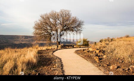 Gamla National Reserve - Stock Photo