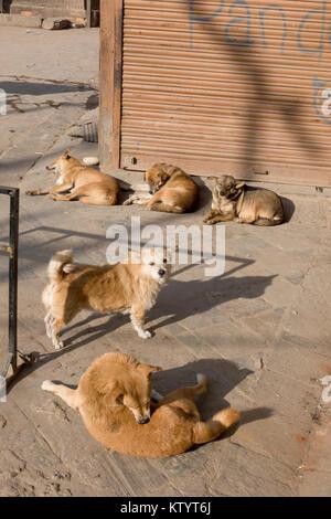 Street dogs snoozing in the sun in Kathmandu, Nepal - Stock Photo