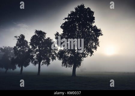 A Row of Trees in Mist - Stock Photo